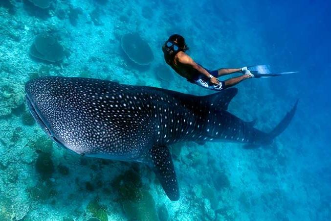 壁纸 动物 海底 海底世界 海洋馆 水族馆 鱼 鱼类 677_451